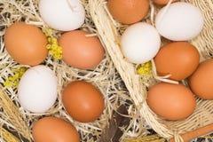 Αυγά κοτόπουλου στο ψάθινα καλάθι και το άχυρο Στοκ Εικόνες