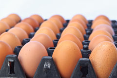 Αυγά κοτόπουλου Στοκ φωτογραφία με δικαίωμα ελεύθερης χρήσης