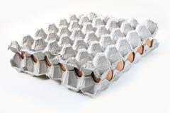 Αυγά μέσα στο δίσκο Στοκ Φωτογραφία