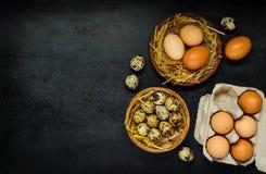 Αυγά με το διάστημα αντιγράφων Στοκ Εικόνες