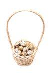 Αυγά νησοπέρδικων σε ένα καλάθι Στοκ Φωτογραφία