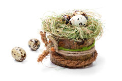 Αυγά νησοπέρδικων στη φωλιά Στοκ Εικόνα