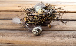 Αυγά νησοπέρδικων στη φωλιά Στοκ Φωτογραφίες