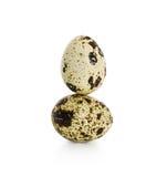 Αυγά νησοπέρδικων Στοκ φωτογραφίες με δικαίωμα ελεύθερης χρήσης