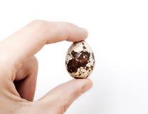Αυγά ορτυκιών διαθέσιμα Στοκ φωτογραφίες με δικαίωμα ελεύθερης χρήσης