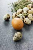 Αυγά ορτυκιών και κοτόπουλου με το θυμάρι Στοκ εικόνες με δικαίωμα ελεύθερης χρήσης