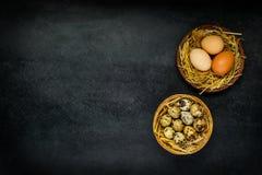 Αυγά ορτυκιών και κοτόπουλου στη φωλιά με τη διαστημική περιοχή αντιγράφων Στοκ φωτογραφία με δικαίωμα ελεύθερης χρήσης