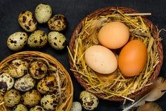 Αυγά ορτυκιών και κοτόπουλου στη φωλιά Στοκ Φωτογραφία