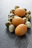 Αυγά ορτυκιών και κοτόπουλου Στοκ Εικόνα