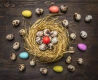 Αυγά ορτυκιών και χρωματισμένα διακοσμητικά αυγά στα σύνορα φωλιών, θέση για το κείμενο στην ξύλινη αγροτική τοπ άποψη υποβάθρου  Στοκ εικόνες με δικαίωμα ελεύθερης χρήσης