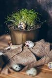 Αυγά ορτυκιών κοντά στις πράσινες σε δοχείο εγκαταστάσεις στο ξύλινο υπόβαθρο sackcloth στοκ εικόνες με δικαίωμα ελεύθερης χρήσης