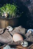 Αυγά ορτυκιών κοντά στις πράσινες σε δοχείο εγκαταστάσεις στο ξύλινο υπόβαθρο sackcloth στοκ εικόνα με δικαίωμα ελεύθερης χρήσης
