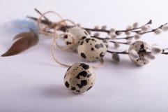 Αυγά ορτυκιών με τα φτερά Στοκ Φωτογραφίες