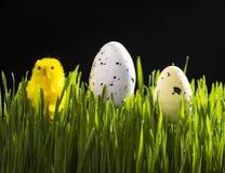 Αυγά ορτυκιών Πάσχας και κίτρινος τεχνητός νεοσσός Στοκ φωτογραφία με δικαίωμα ελεύθερης χρήσης