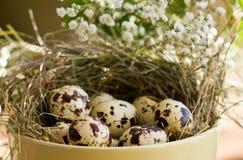 Αυγά ορτυκιών σε ένα κύπελλο, κινηματογράφηση σε πρώτο πλάνο Στοκ Φωτογραφία