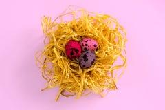 Αυγά ορτυκιών σε μια διακοσμητική φωλιά σε ένα χρωματισμένο υπόβαθρο κορυφαία όψη Η έννοια του εορτασμού Πάσχας Στοκ Εικόνες