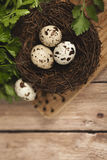 Αυγά ορτυκιών σε μια φωλιά σε ένα ξύλινο υπόβαθρο Στοκ Εικόνες