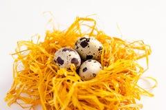 Αυγά ορτυκιών στη διακοσμητική φωλιά σε ένα άσπρο υπόβαθρο Στοκ φωτογραφίες με δικαίωμα ελεύθερης χρήσης