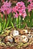 Αυγά ορτυκιών στη φωλιά μεταξύ των ρόδινων λουλουδιών Στοκ Εικόνα
