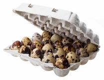 Αυγά ορτυκιών στο κιβώτιο χαρτοκιβωτίων Στοκ Εικόνα