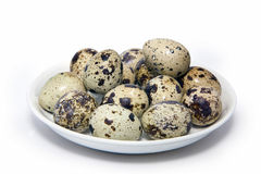 Αυγά ορτυκιών Στοκ φωτογραφίες με δικαίωμα ελεύθερης χρήσης