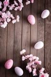 Αυγά Πάσχας και άνθος κερασιών Στοκ Εικόνα