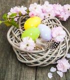 Αυγά Πάσχας και άνθος sakura Στοκ Εικόνα