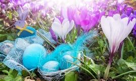 Αυγά Πάσχας και λαγουδάκι Πάσχας μεταξύ των κρόκων Στοκ Εικόνες