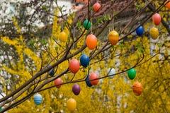αυγά Πάσχας κλάδων Στοκ φωτογραφίες με δικαίωμα ελεύθερης χρήσης
