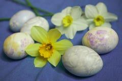 Αυγά Πάσχας με τα λουλούδια daffodils στο μπλε υπόβαθρο Στοκ Εικόνα