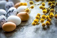 Αυγά Πάσχας με τον κλάδο ανθών στο άσπρο υπόβαθρο Στοκ Εικόνα