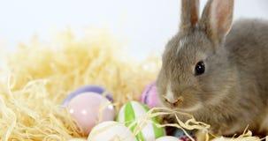Αυγά Πάσχας με το λαγουδάκι Πάσχας στη φωλιά φιλμ μικρού μήκους