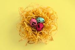 Αυγά Πάσχας Αυγά ορτυκιών σε μια διακοσμητική φωλιά σε ένα χρωματισμένο υπόβαθρο κορυφαία όψη Η έννοια του εορτασμού Πάσχας Στοκ εικόνα με δικαίωμα ελεύθερης χρήσης