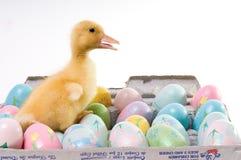 αυγά Πάσχας παπιών κομφετί Στοκ φωτογραφία με δικαίωμα ελεύθερης χρήσης