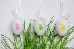 Αυγά Πάσχας που κρεμούν στις πράσινες εγκαταστάσεις στοκ φωτογραφία