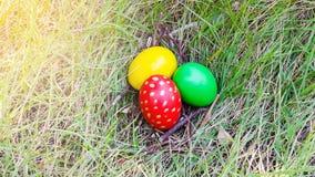 Αυγά Πάσχας στη φωλιά κλάδων στο λιβάδι Στοκ Εικόνες