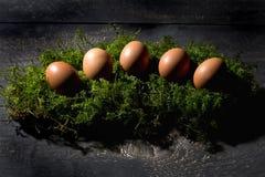 Αυγά Πάσχας στο βρύο, φωλιά Πάσχας Στοκ εικόνα με δικαίωμα ελεύθερης χρήσης