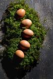 Αυγά Πάσχας στο βρύο, φωλιά Πάσχας Στοκ Εικόνα