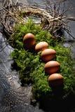 Αυγά Πάσχας στο βρύο, φωλιά Πάσχας Στοκ Φωτογραφίες