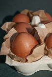 Αυγά Πάσχας Στοκ φωτογραφίες με δικαίωμα ελεύθερης χρήσης