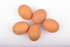 αυγά πέντε φρέσκα Στοκ Φωτογραφίες