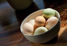 αυγά παπιών κοτόπουλου στοκ εικόνες