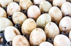 Αυγά παπιών Στοκ Φωτογραφίες
