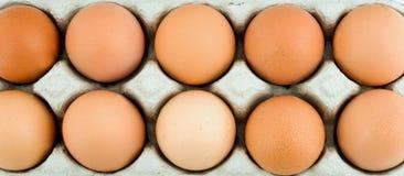 αυγά περίπτωσης προστατ&epsilo Στοκ Εικόνες