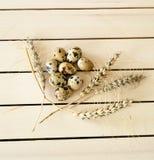 Αυγά πουλιών, εικόνες των αυγών πουλιών στη φυσική φωλιά Στοκ φωτογραφία με δικαίωμα ελεύθερης χρήσης