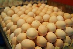 Αυγά που συσσωρεύονται στο δίσκο εγγράφου στοκ εικόνα με δικαίωμα ελεύθερης χρήσης