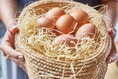 Αυγά που τίθενται στο thatch Στοκ Εικόνα