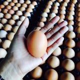 Αυγά σε διαθεσιμότητα Στοκ Φωτογραφία