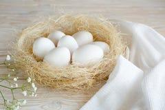 Αυγά σε μια φωλιά Στοκ Εικόνα