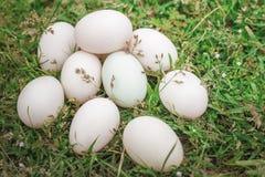 Αυγά σε μια χούφτα Στοκ Εικόνα